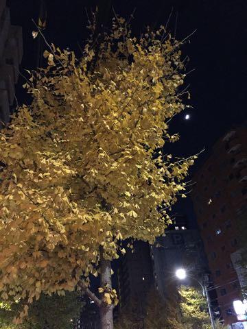 イチョウいちょう銀杏秋落葉イチョウ並木イチョウの葉黄色イチョウの木オスメス銀杏臭いにおいクサイ落ち葉の絨毯落葉掃除いちょう画像_1.jpg