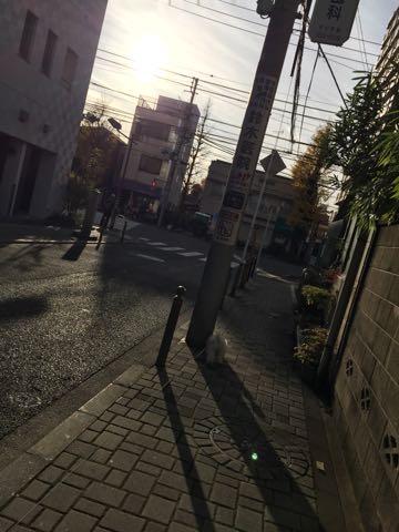 ビションフリーゼ子犬フントヒュッテこいぬ家族募集里親関東_2473.jpg