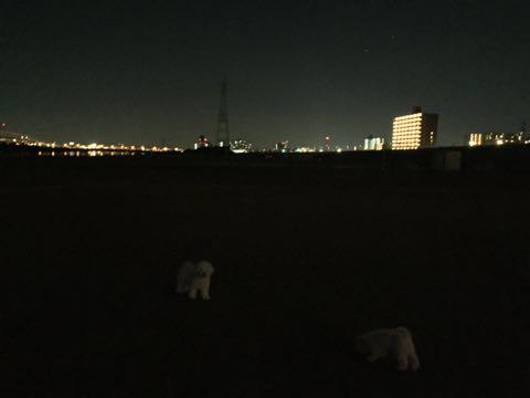 ビションフリーゼ子犬フントヒュッテこいぬ家族募集里親関東_2490.jpg