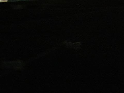 ビションフリーゼ子犬フントヒュッテこいぬ家族募集里親関東_2662.jpg