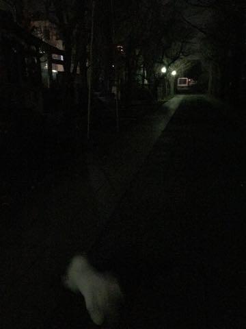 ビションフリーゼ子犬フントヒュッテこいぬ家族募集里親関東_2725.jpg