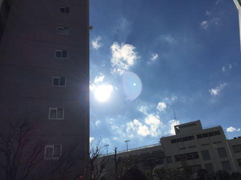 ビションフリーゼ子犬フントヒュッテこいぬ家族募集里親関東_2751.jpg