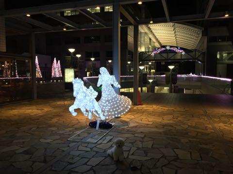 ビションフリーゼ子犬フントヒュッテこいぬ家族募集里親関東_2768.jpg