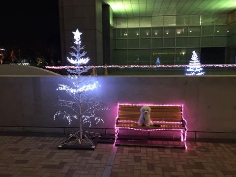 ビションフリーゼ子犬フントヒュッテこいぬ家族募集里親関東_2776.jpg