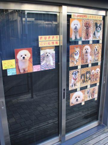 トリミングモデル2017写真画像犬トリミングフントヒュッテ文京区犬の美容室駒込犬カットスタイルビショントイプードルお正月生地獅子舞hundehutte東京_4.jpg
