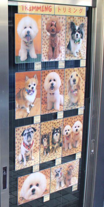 トリミングモデル2017写真画像犬トリミングフントヒュッテ文京区犬の美容室駒込犬カットスタイルビショントイプードルお正月生地獅子舞hundehutte東京_5.jpg