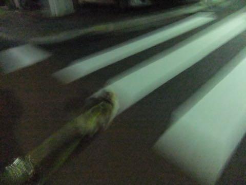 チワワトリミング文京区フントヒュッテチワワサマーカット画像ペットホテル東京ドッグホテル様子おさんぽ犬ホテル料金hundehutte駒込_42.jpg