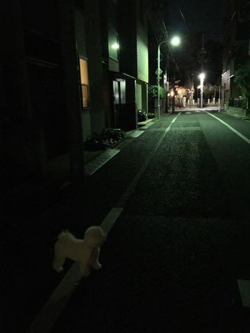 ビションフリーゼ子犬フントヒュッテこいぬ家族募集里親関東_2884.jpg