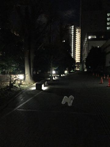 ビションフリーゼ子犬フントヒュッテこいぬ家族募集里親関東_2893.jpg