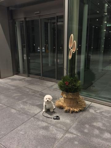 ビションフリーゼ子犬フントヒュッテこいぬ家族募集里親関東_2901.jpg