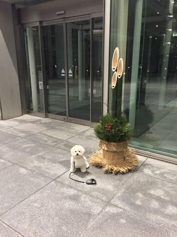 ビションフリーゼ子犬フントヒュッテこいぬ家族募集里親関東_2902.jpg