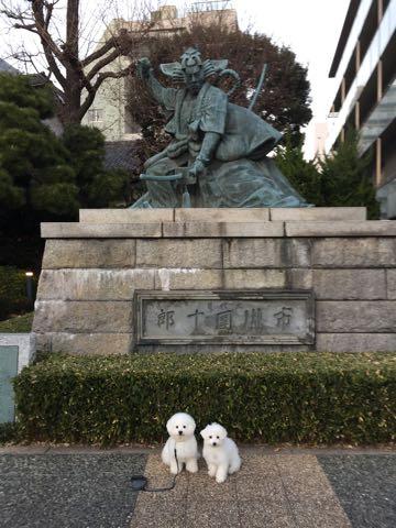 ビションフリーゼ子犬フントヒュッテこいぬ家族募集里親関東_2960.jpg