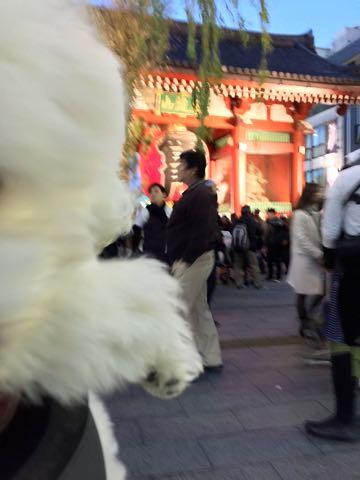 ビションフリーゼ子犬フントヒュッテこいぬ家族募集里親関東_2969.jpg