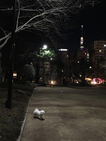 ビションフリーゼ子犬フントヒュッテこいぬ家族募集里親関東_2983.jpg