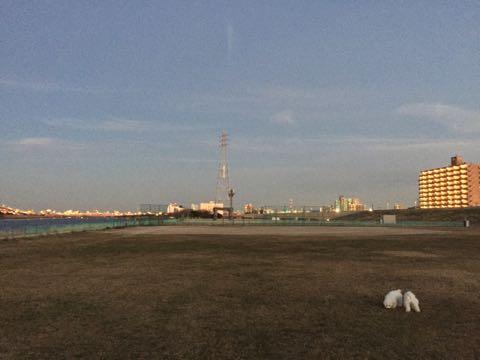 ビションフリーゼ子犬フントヒュッテこいぬ家族募集里親関東_3013.jpg