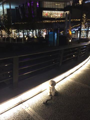 ビションフリーゼ子犬フントヒュッテこいぬ家族募集里親関東_3049.jpg