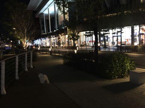ビションフリーゼ子犬フントヒュッテこいぬ家族募集里親関東_3050.jpg
