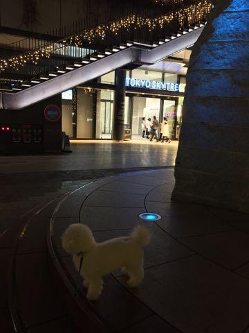 ビションフリーゼ子犬フントヒュッテこいぬ家族募集里親関東_3058.jpg