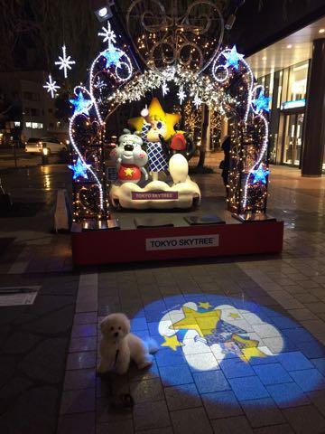 ビションフリーゼ子犬フントヒュッテこいぬ家族募集里親関東_3060.jpg