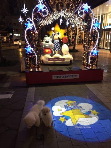 ビションフリーゼ子犬フントヒュッテこいぬ家族募集里親関東_3062.jpg
