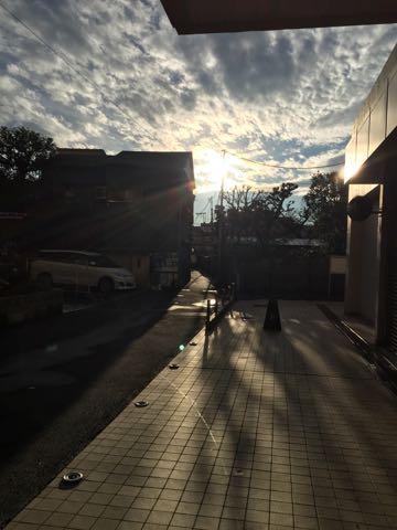 ビションフリーゼ子犬フントヒュッテこいぬ家族募集里親関東_3087.jpg