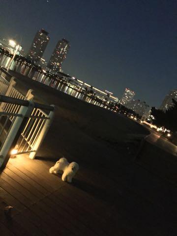 ビションフリーゼ子犬フントヒュッテこいぬ家族募集里親関東_3148.jpg