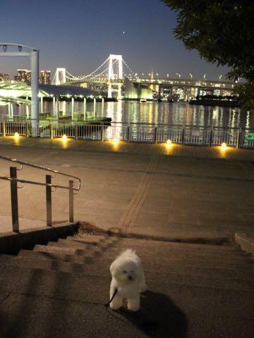 ビションフリーゼ子犬フントヒュッテこいぬ家族募集里親関東_3149.jpg