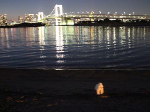 ビションフリーゼ子犬フントヒュッテこいぬ家族募集里親関東_3155.jpg