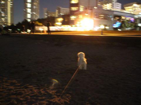 ビションフリーゼ子犬フントヒュッテこいぬ家族募集里親関東_3157.jpg