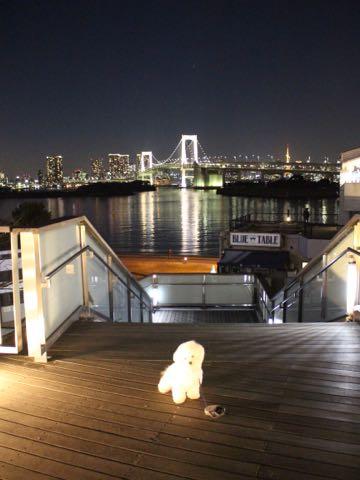 ビションフリーゼ子犬フントヒュッテこいぬ家族募集里親関東_3161.jpg