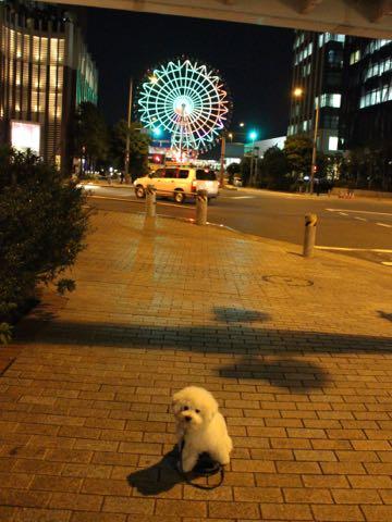 ビションフリーゼ子犬フントヒュッテこいぬ家族募集里親関東_3171.jpg