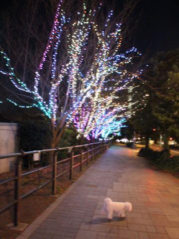 ビションフリーゼ子犬フントヒュッテこいぬ家族募集里親関東_3178.jpg