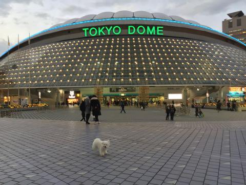 ビションフリーゼ子犬フントヒュッテこいぬ家族募集里親関東_3235.jpg