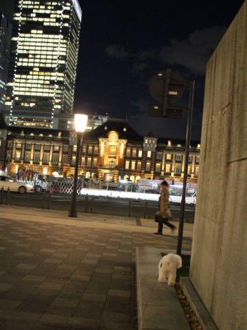 ビションフリーゼ子犬フントヒュッテこいぬ家族募集里親関東_3263.jpg