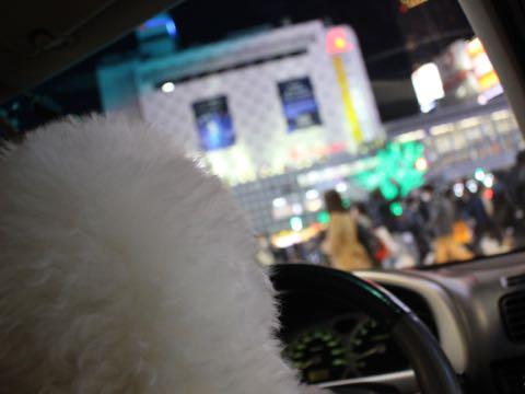 ビションフリーゼ子犬フントヒュッテこいぬ家族募集里親関東_3289.jpg