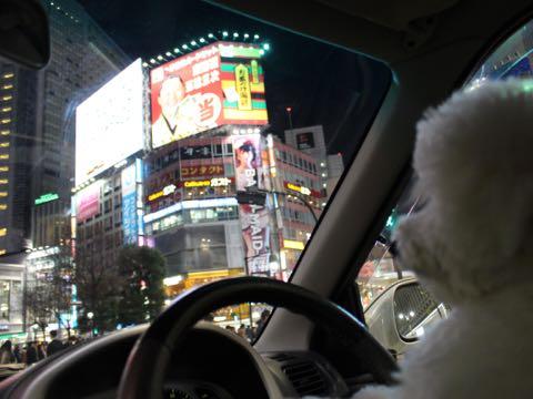 ビションフリーゼ子犬フントヒュッテこいぬ家族募集里親関東_3292.jpg