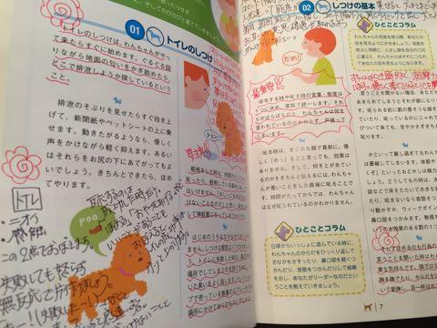 ビションフリーゼ子犬フントヒュッテこいぬ家族募集里親関東_3302.jpg