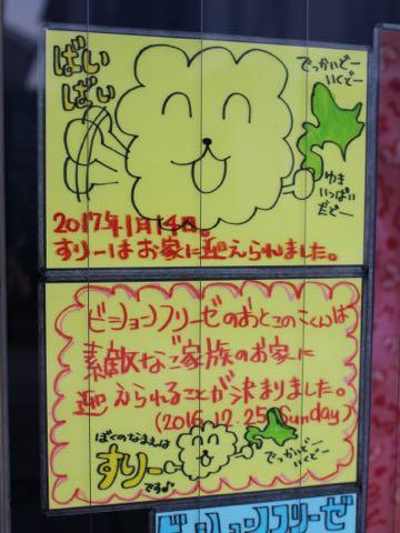 ビションフリーゼ子犬フントヒュッテこいぬ家族募集里親関東_3320.jpg