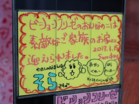 ビションフリーゼ子犬フントヒュッテこいぬ家族募集里親関東_3321.jpg