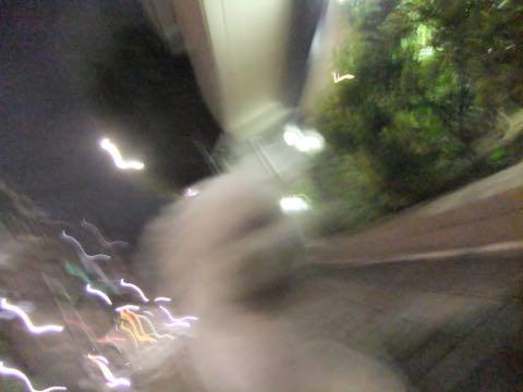 ビションフリーゼトリミング文京区フントヒュッテ駒込hundehutteビションフリーゼカット画像ビションカット都内ペットホテル料金東京犬温泉効果_74.jpg