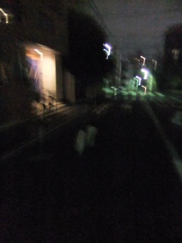 ビションフリーゼトリミング文京区フントヒュッテ駒込hundehutteビションフリーゼカット画像ビションカット都内ペットホテル料金東京犬温泉効果_95.jpg