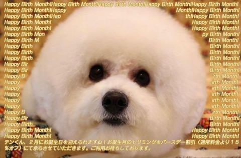 ビションフリーゼトリミング文京区フントヒュッテ駒込ビションカットスタイルモデル犬画像ビションフリーゼ頭丸く都内トリミングサロンビション東京hundehutte_16.jpg