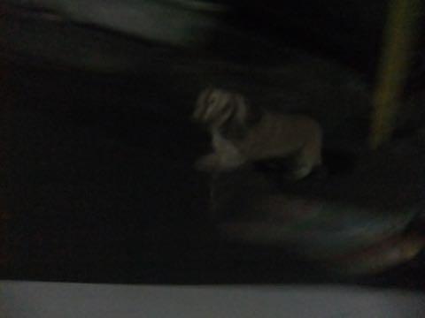 ダックスフントミニチュアトリミング都内フントヒュッテ駒込犬の歯みがき画像文京区歯垢歯石除去歯磨きゼオライトデンタルケア犬温泉東京_35.jpg