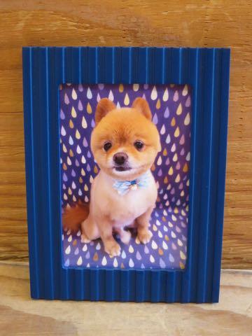 ミックス犬トリミング東京ポメラニアンとチワワのミックス犬画像ミックス犬トリミング料金文京区フントヒュッテ駒込サマーカットポメチワミックス犬_6.jpg