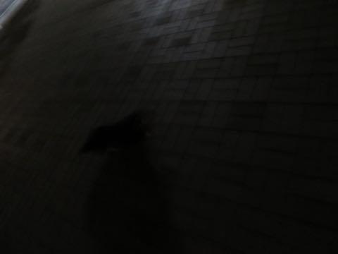 ダックスペットホテル様子おさんぽ犬おあずかり文京区フントヒュッテ東京ダックストリミング画像都内ペットホテル駒込カニヘンダックスカニンヘンダックス_68.jpg