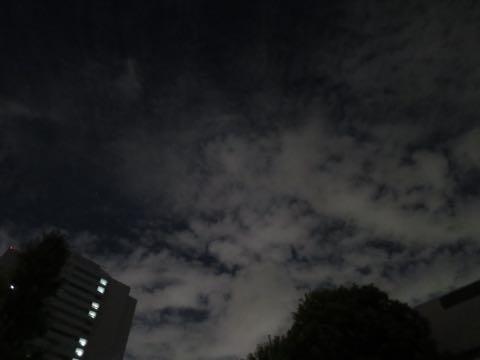 ダックスペットホテル様子おさんぽ犬おあずかり文京区フントヒュッテ東京ダックストリミング画像都内ペットホテル駒込カニヘンダックスカニンヘンダックス_69.jpg