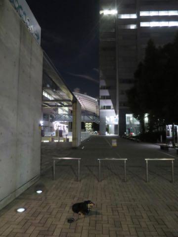 ダックスペットホテル様子おさんぽ犬おあずかり文京区フントヒュッテ東京ダックストリミング画像都内ペットホテル駒込カニヘンダックスカニンヘンダックス_72.jpg