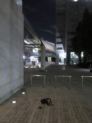 ダックスペットホテル様子おさんぽ犬おあずかり文京区フントヒュッテ東京ダックストリミング画像都内ペットホテル駒込カニヘンダックスカニンヘンダックス_73.jpg