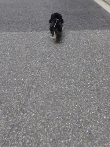 ダックスペットホテル様子おさんぽ犬おあずかり文京区フントヒュッテ東京ダックストリミング画像都内ペットホテル駒込カニヘンダックスカニンヘンダックス_78.jpg