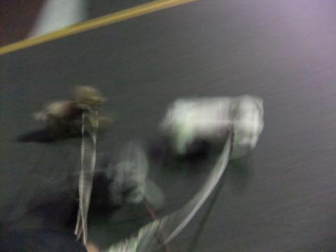 トイ・プードル極小サイズティーカッププードル東京トイプードルトリミング画像フントヒュッテ駒込ビションフリーゼトリミング文京区ペットホテル都内_153.jpg